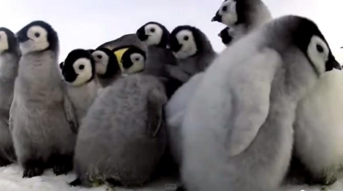 Pinguini indifferenti