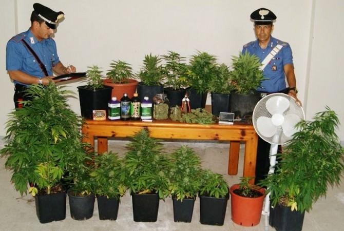 piante guardia mangano