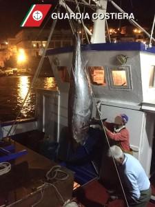 Pesca illecita tonno rosso