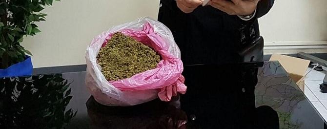 marijuana sequestrata pavano
