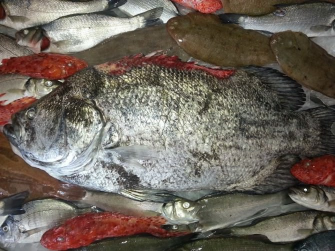 pesce 26-9-14