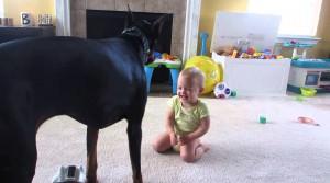 Incredibile! Un Dobermann e un bambino che…