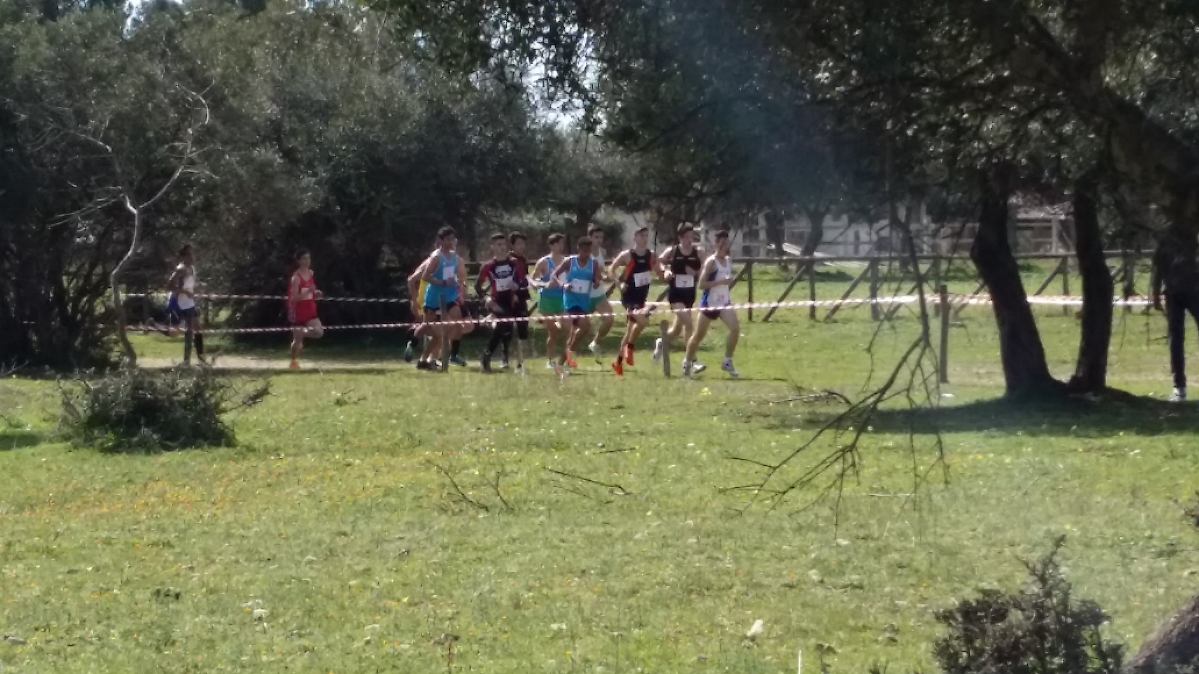 Campionati studenteschi di corsa campestre maschile