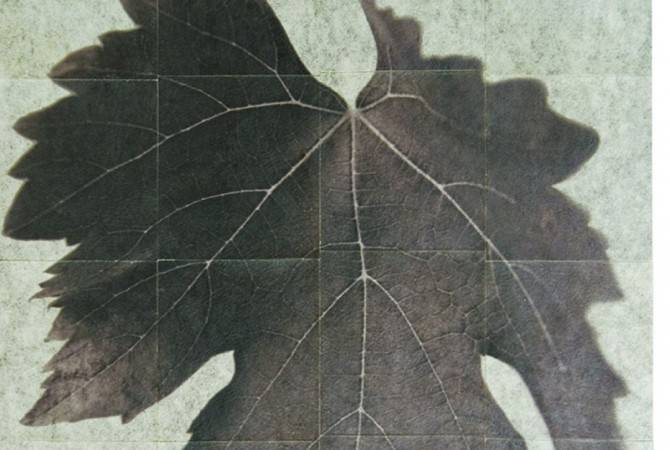 Sergio Zavattieri, Vitis Vinifera, 2012, installazione fotografica, Stampa archival su carta acquarello con albume e vernice 261,5x 175,8 cm