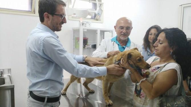 Zaira, il primo cane microchippato nell'Ambulatorio