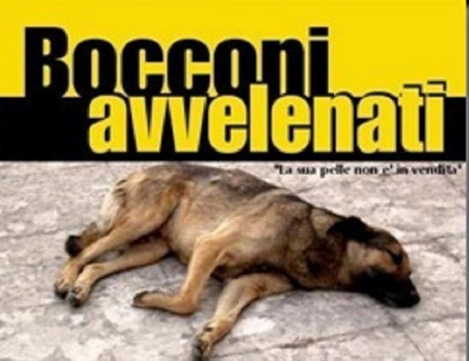 bocconi-avvelenati_thumb