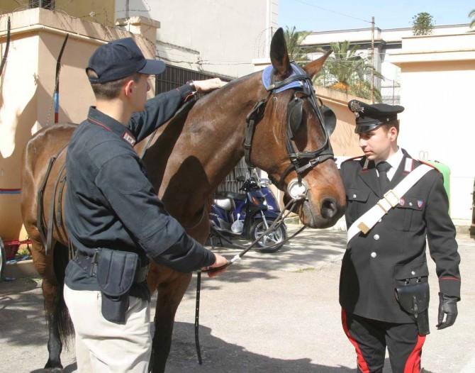 corse cavalli1