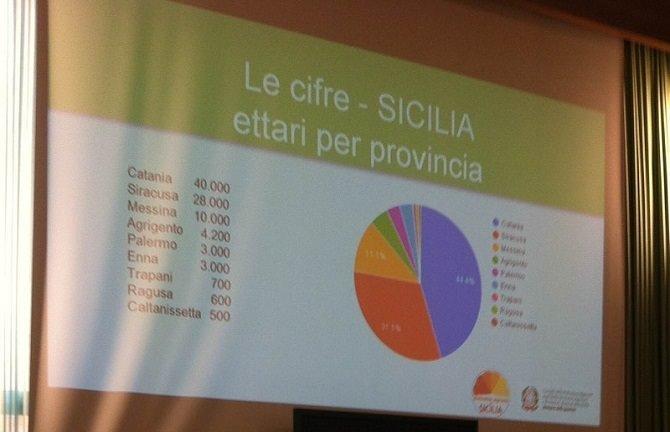 agrumicoltura siciliana