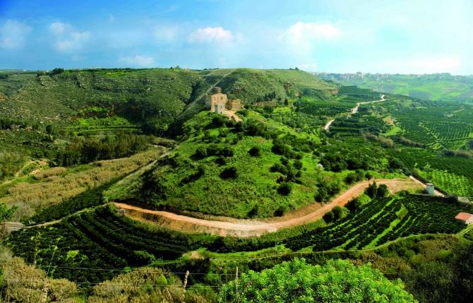 01 Arancia di Ribera DOP - agrumeti storici castello poggio diana - fotografi associati palermo
