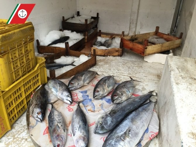 giarre pesce denunce