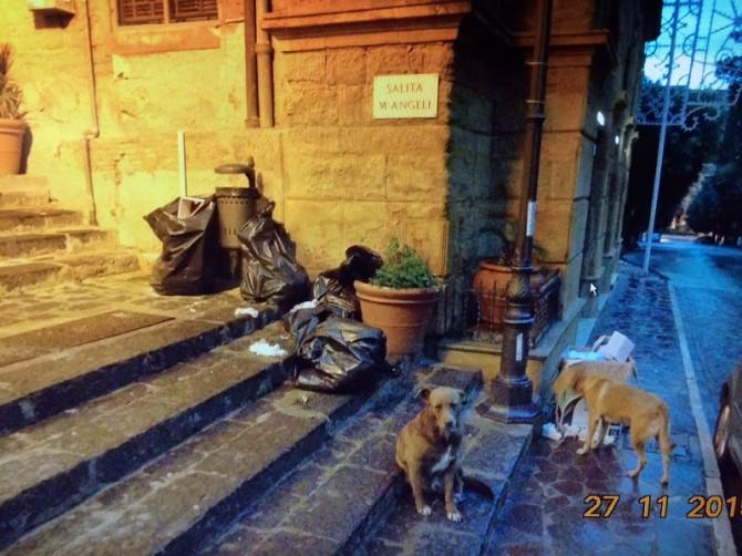 via atenea con cani