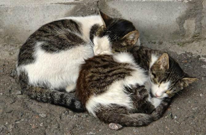 Gatti-di-strada