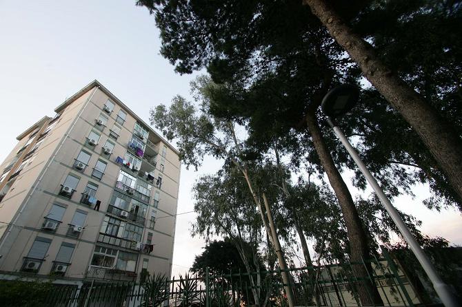 """""""Potate gli alberi di via Raccuglia"""" il grido d'allarme dei cittadini di Monte Po"""
