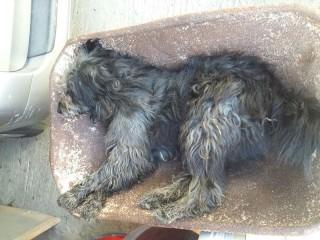 Morte cane Birillo Frigintini 10.01.16