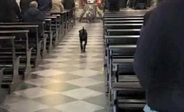 Leo, il cane che ha commosso Favignana