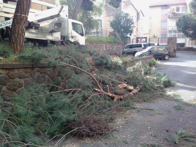 potatura alberi via liguria (1)