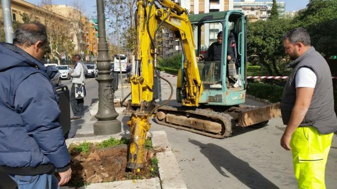 Macchina espiantazione alberi coltivazione