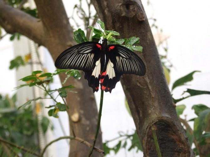 """Modica, dal 12 marzo ritorna """"la casa delle farfalle"""""""