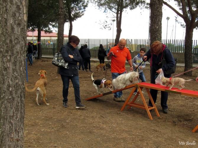 Belpasso: aperta la prima area di sgambamento per cani