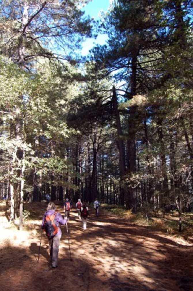 Trekking ginestre (1)