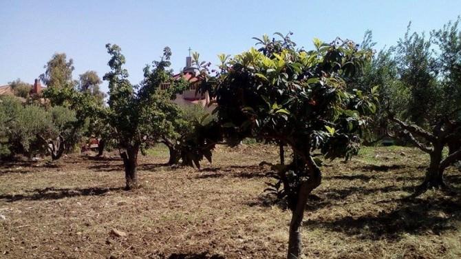 """Castellammare: nasce l'orto """"sociale"""" in un terreno sequestrato alla mafia"""