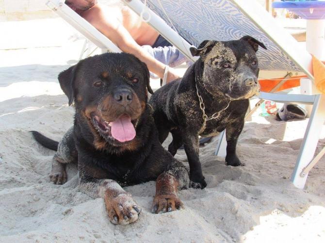 """Si rinnova l'appuntamento con """"Dog Beach Catania"""". Divertimento e giochi in spiaggia per gli amici a 4 zampe"""