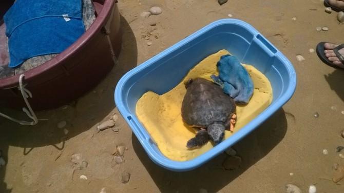 """Cattolica Eraclea, Marevivo pulisce la costa: """"Troppi rifiuti"""""""