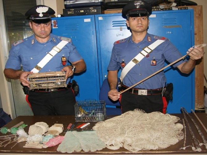 Bracconieri cardellini carabinieri