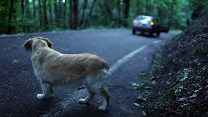 abbandono-cani