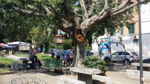 albero 11