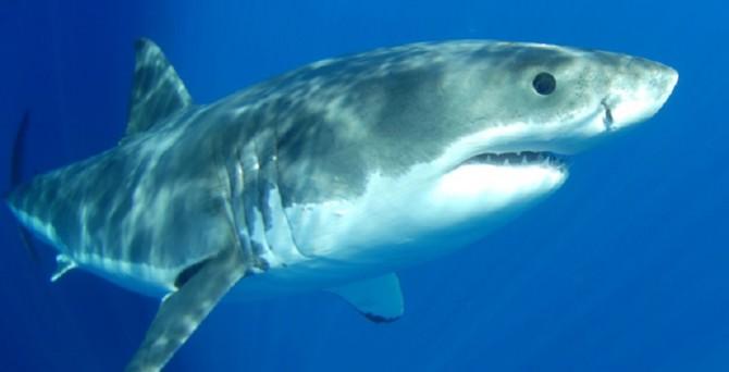 Riccardo Stura Avogadri, l'uomo che difenderˆ le spiagge di Sharm dagli attacchi degli squali