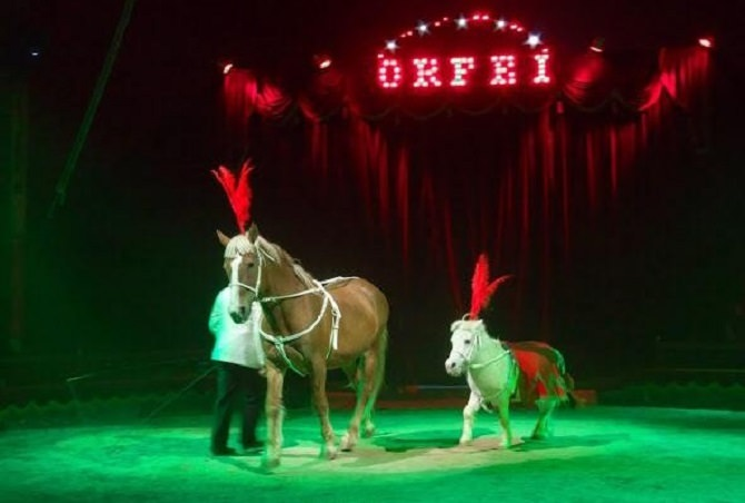 cavalli-circo-orfei