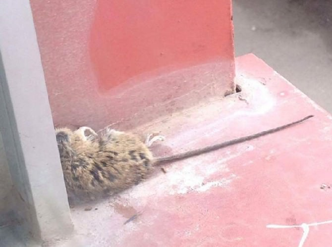 Misterbianco: primo giorno di scuola tra sporcizia, topi e degrado