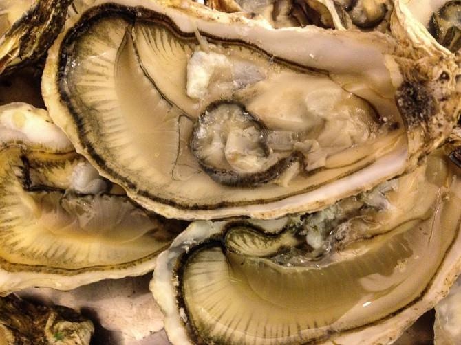 shells-1141495_960_720