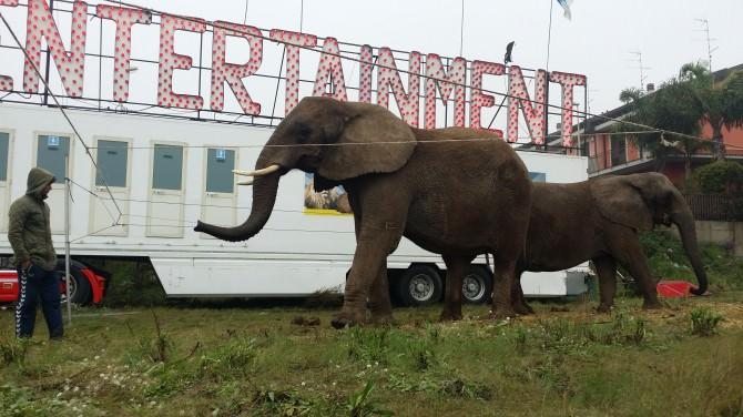 Elefanti per strada nel territorio etneo