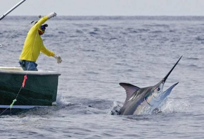 pesca-pesce-spada
