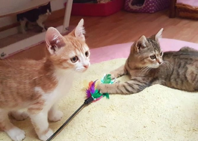 """Rifugi e colonie feline a Catania: ecco """"Le AristoGatte"""""""