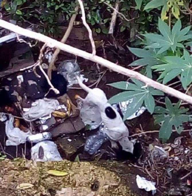 Scordia, cane in un fossato salvato dai vigili del fuoco