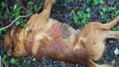 Ecatombe di cani tra Acireale e Santa Venerina, uccisi a colpi fucile a distanza ravvicinata