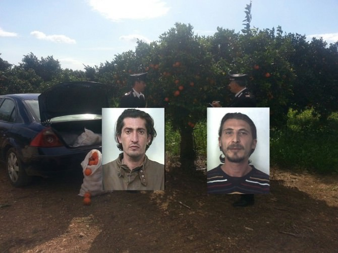 Cassibile: cercano di rubare 200 kg di limone e un quintale di ortaggi, arrestati