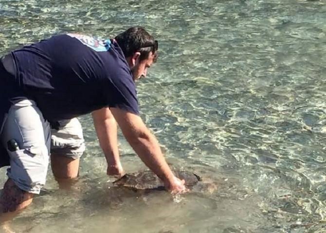 La tartaruga Ciccio torna in libertà