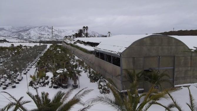 Gelo in Sicilia: la conta dei danni. Randazzo tra i paesi più colpiti