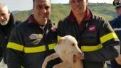 I Vigili del fuoco al lavoro per salvare un cane tra i rovi: necessario intervento Elicottero Drago