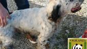 Caltanissetta, cane smarrito da un mese ritrovato e restituito ai proprietari
