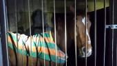 """Lo """"zoo"""" della vergogna. Cavalli, cani, galline e maiali abbandonati: 61enne denunciato. LE FOTO"""