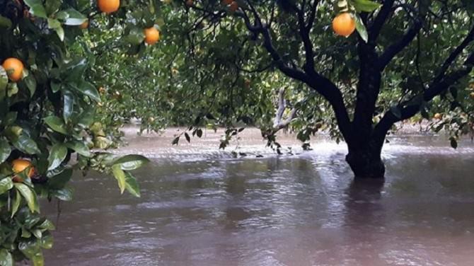 Il maltempo colpisce il Lentinese e l'intensa agricoltura di agrumi.