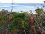 Palme nane della riserva dello Zingaro