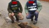 San Cataldo: esche avvelenate uccidono decine di cani, volpi e altri animali