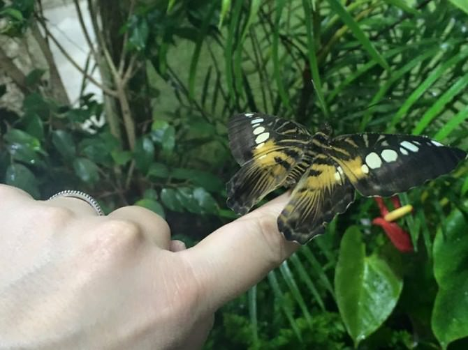 Casa delle Farfalle di Modica, spazi triplicati e tante novità