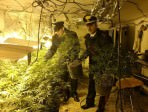coltivazione droga a regola d'arte 1